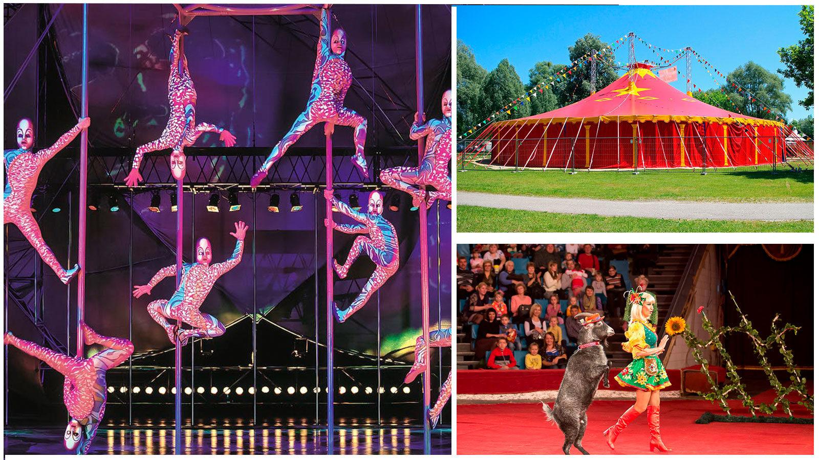 цирк-в-геенджике