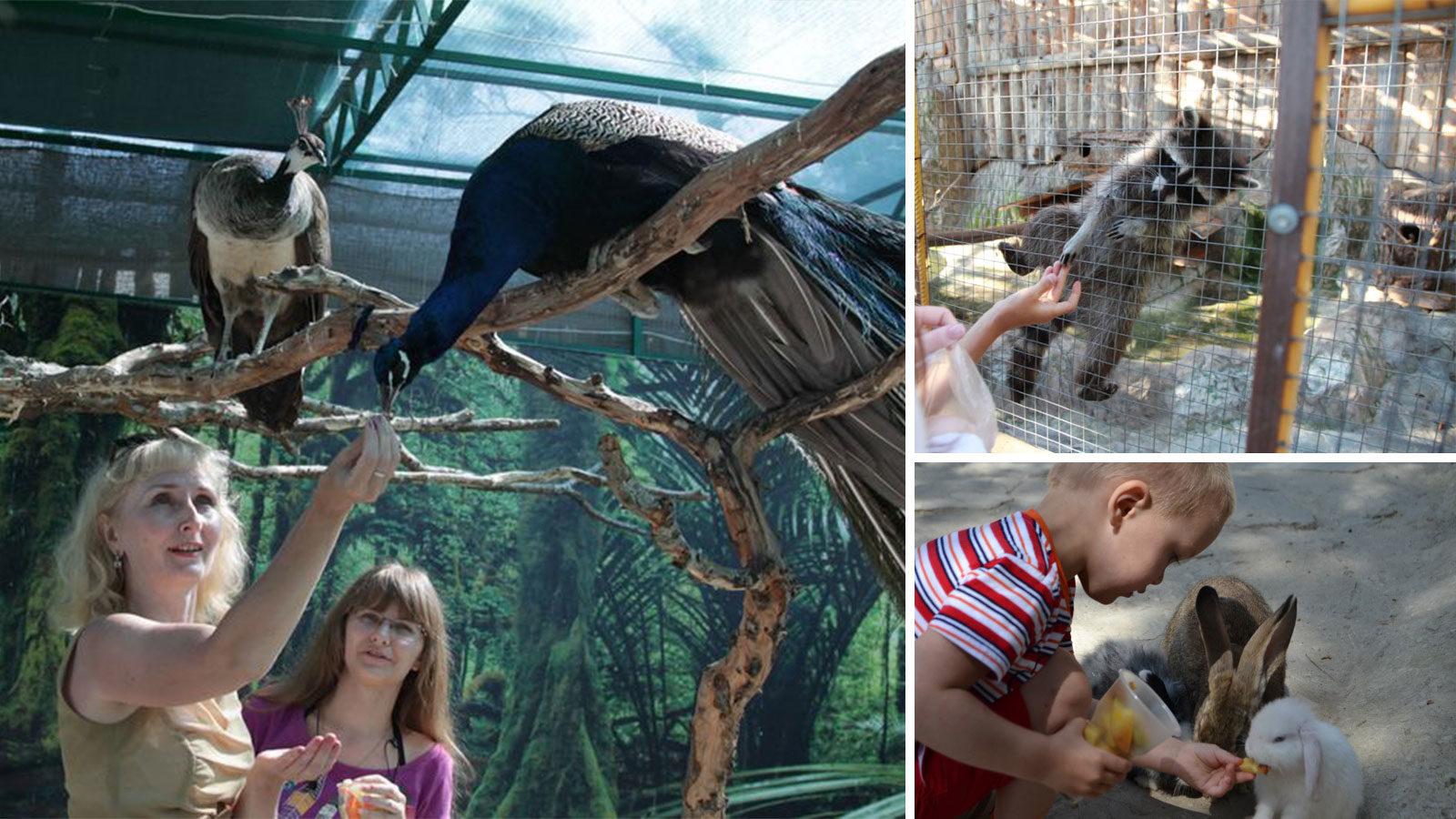 Контактный-зоопарк-в-Геленджике