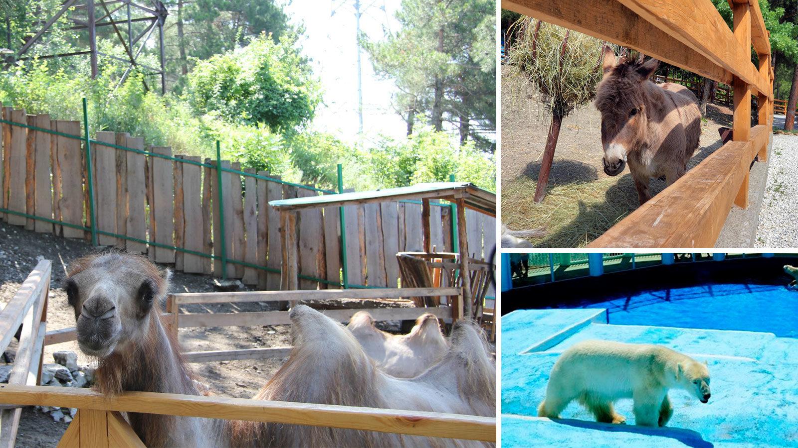 Зоопарк-в-Геленджике